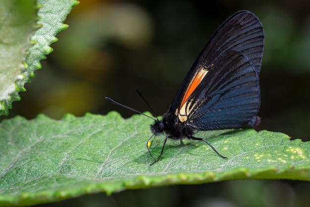 Schmetterling thront auf einem baumblatt, das sich in der sonne aalt