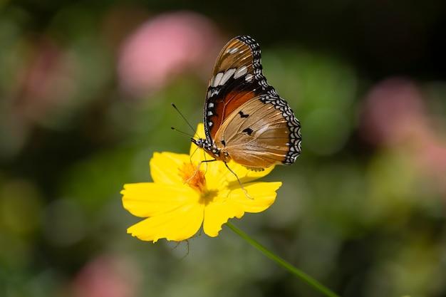 Schmetterling und gelbe blume