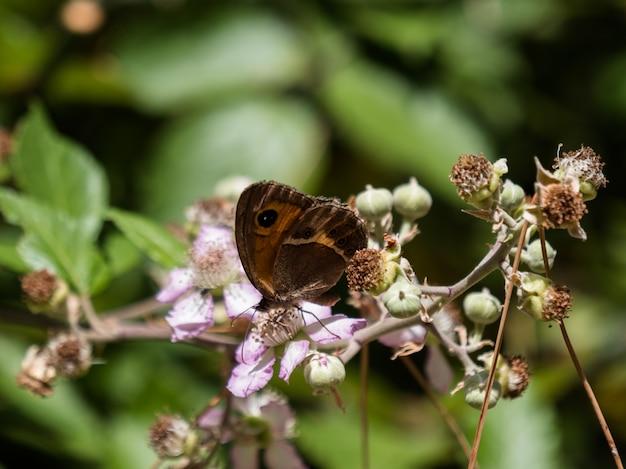 Schmetterling und rosa blume