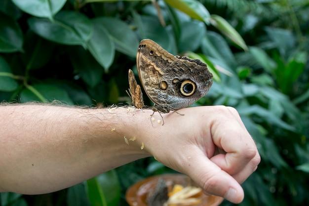 Schmetterling zur hand