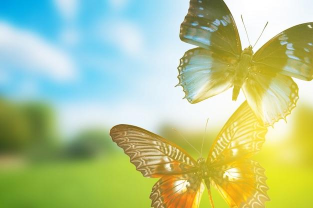 Schmetterlinge bei sonnenuntergang