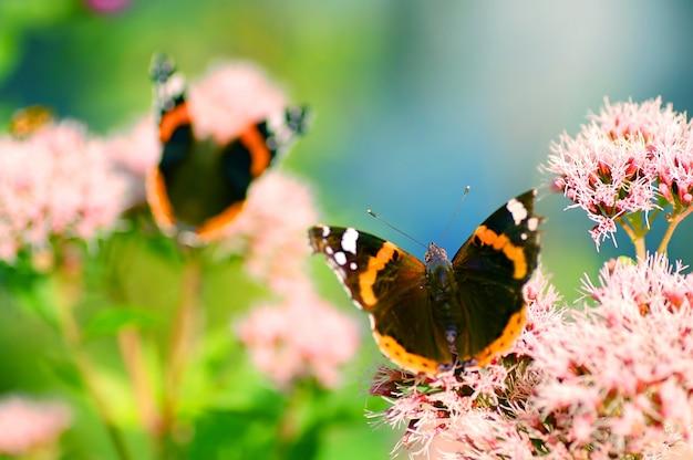 Schmetterlinge mit opne wigns