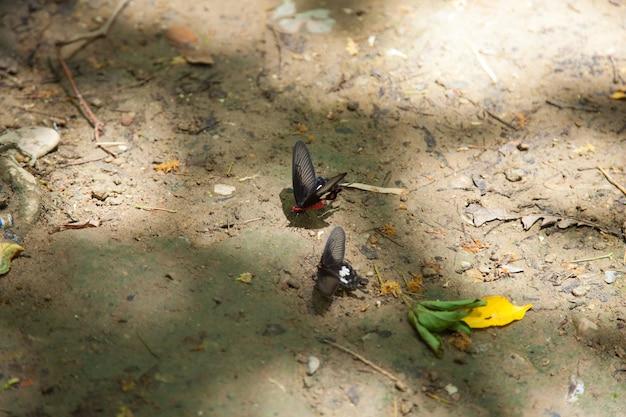 Schmetterlinge sind für den verzehr von mineralien im boden.