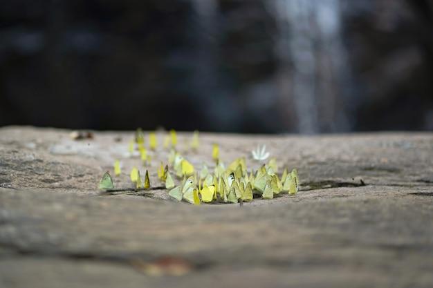 Schmetterlinge stehen auf stein