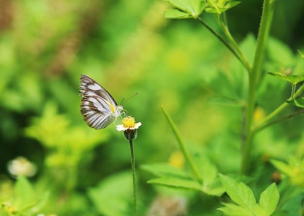 Schmetterlinge und blumen im garten