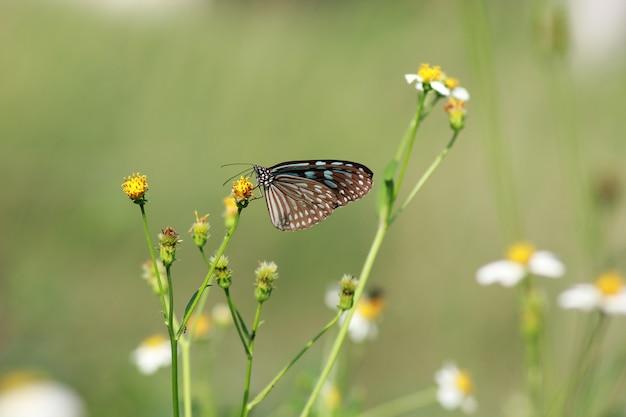 Schmetterlinge und blumen in einem schönen garten.