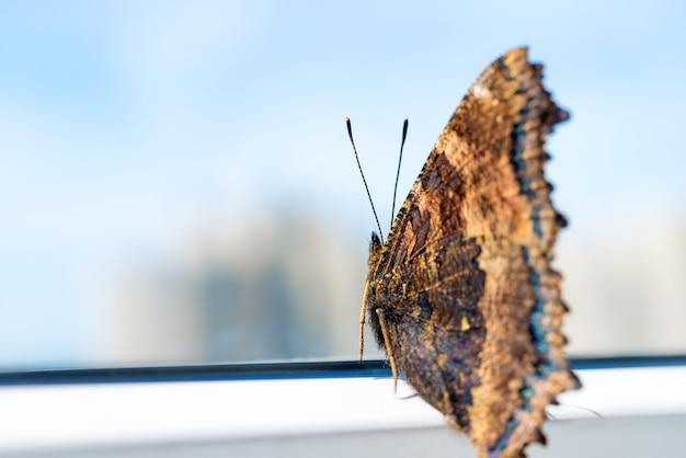 Schmetterlingsgelbbeiniges schildpatt oder großes schildpatt (nymphalis xanthomelas) mit blauem himmel im hintergrund