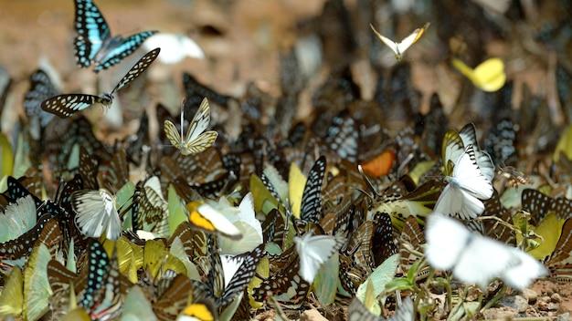 Schmetterlingsgruppe