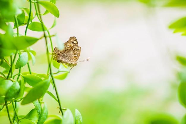 Schmetterlingshintergrund mit natur