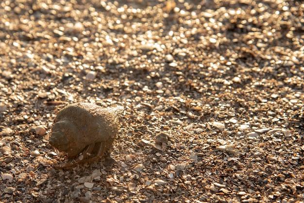 Schmutzige einsiedlerkrebs in der schale am strand