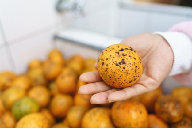 Schmutzige orangen mit flecken