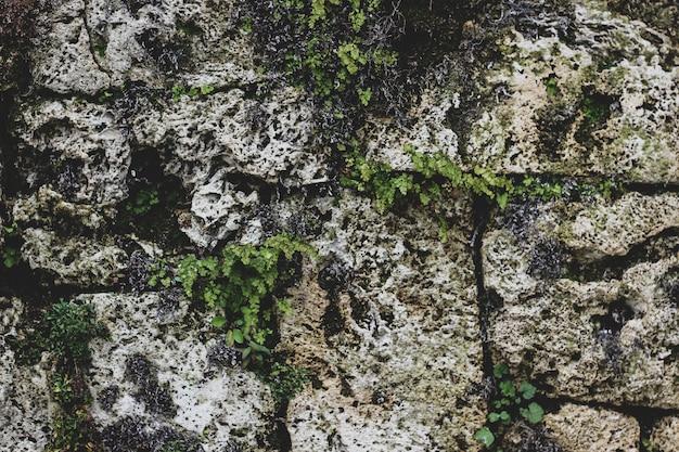 Schmutziger grauer stein verziert mit blättern und moos