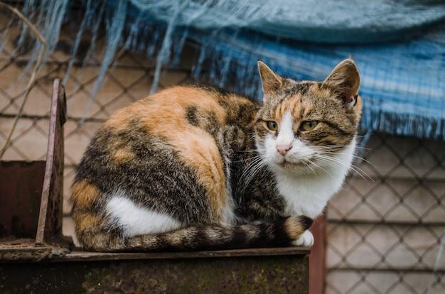 Schmutziger straßenkatzenweg in den straßen, einsame obdachlose katze