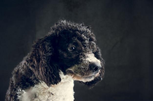 Schmutziges hundeportrait