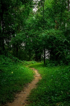 Schmutzpfad im regenwaldnaturhintergrund