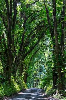 Schmutzstraße im abgelegenen dschungel in big island, hawaii