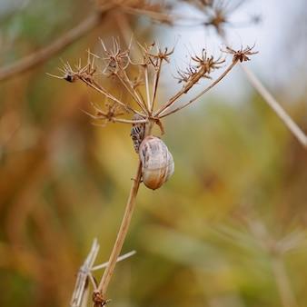 Schnecke an der pflanze