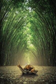 Schnecke auf dem boden. der pfad grenzte an zwei seiten ohne bambuswaldhintergrund an.
