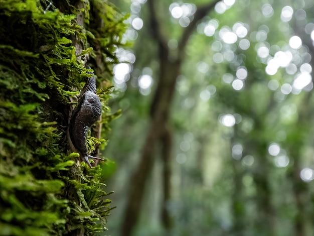 Schnecke, die den baum im regenwald weitergeht.