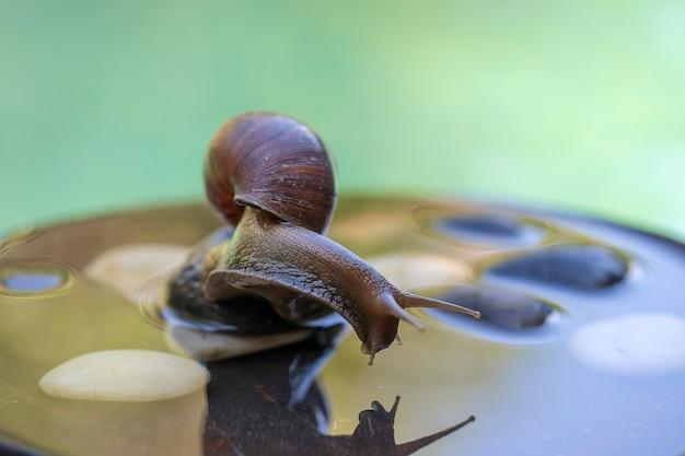 Schnecke in einer schale kriecht auf einem keramiktopf mit wasser, sommertag im garten