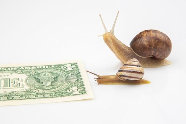 Schnecken bewegen sich in richtung ihres finanziellen ziels.