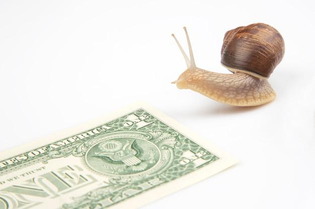 Schnecken rennen mit geld bis zur ziellinie.