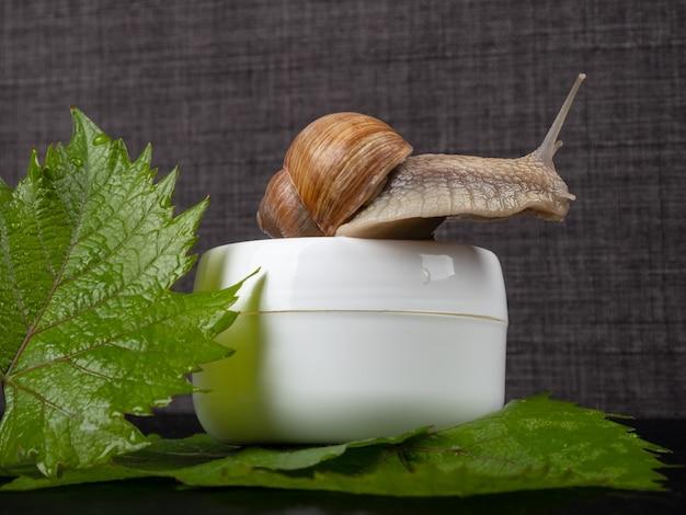 Schneckenschleimcreme, biokosmetik zur hautpflege.