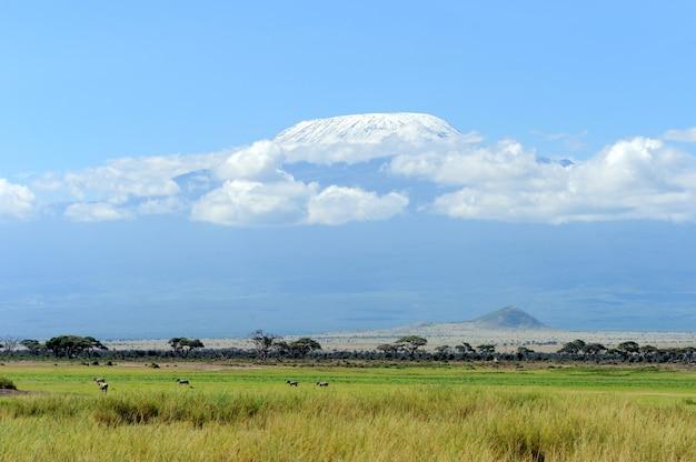Schnee auf dem kilimanjaro in amboseli