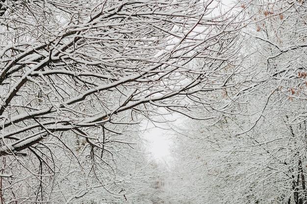 Schnee auf den zweigen im winter