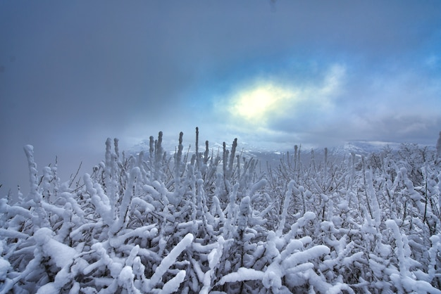 Schnee auf niedrigen pflanzen in den bergen mit wind