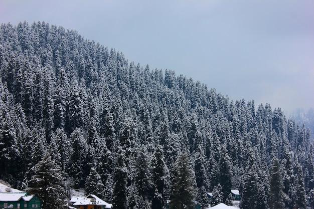 Schnee bedeckte bäume auf berg