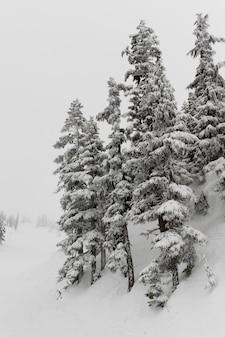 Schnee bedeckte bäume, pfeifer, britisch-columbia, kanada