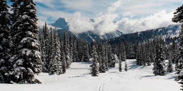 Schnee bedeckte bäume, symphonie-amphitheater, whistler, britisch-columbia, kanada