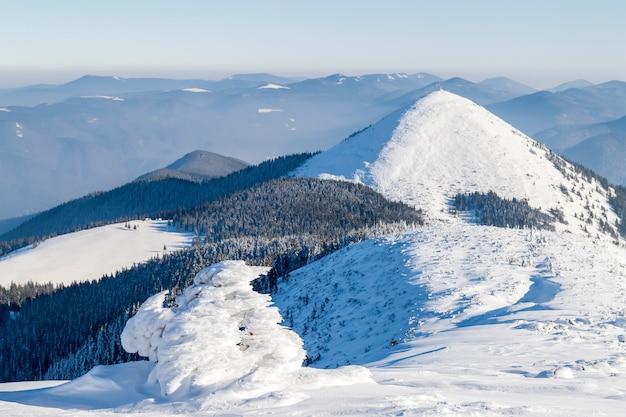 Schnee bedeckte verbogene kleine kiefer in den winterbergen. bunte szene im freien, guten rutsch ins neue jahr-feierkonzept. nachbearbeitetes foto der künstlerischen art.