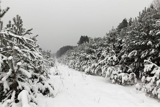 Schnee fotografiert in der wintersaison, die nach einem schneefall auftrat. nahansicht,