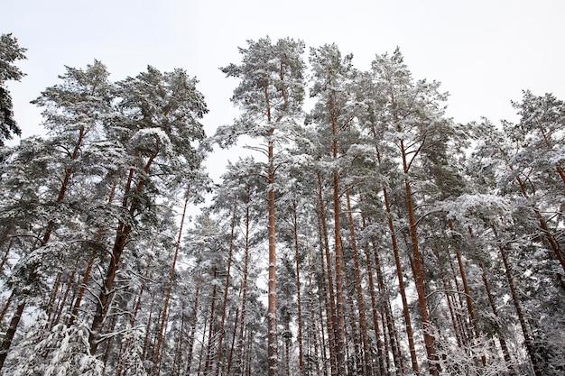 Schnee fotografiert in der wintersaison, die nach einem schneefall auftrat. nahaufnahme,