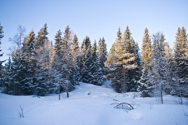 Schnee norwegen waldkalter winter