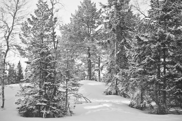 Schnee norwegen waldkalter winter