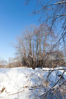 Schnee- und eisbedeckte bäume und andere pflanzen im winter