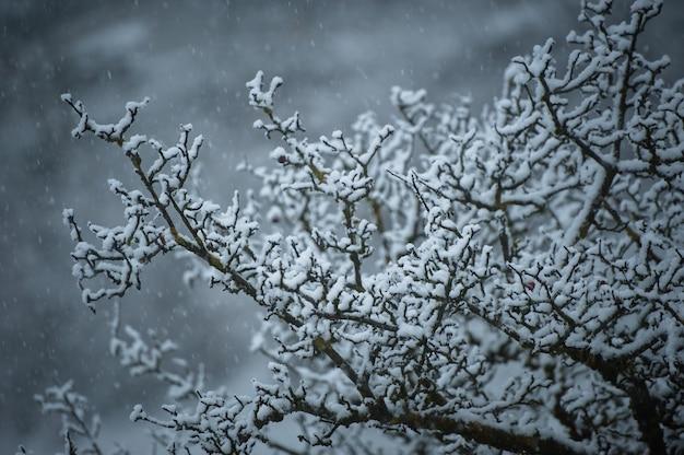 Schneebedeckte äste während eines schneefalls.