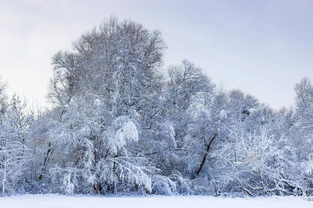 Schneebedeckte bäume am waldrand nach schneefall an einem wolkigen wintertag. winterlandschaft