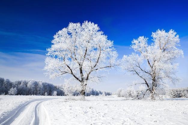 Schneebedeckte bäume gegen den himmel
