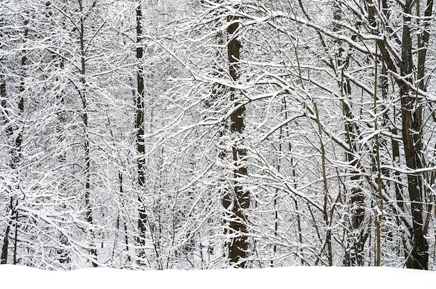 Schneebedeckte bäume im verschneiten winterwald