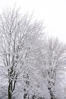 Schneebedeckte bäume im winter park