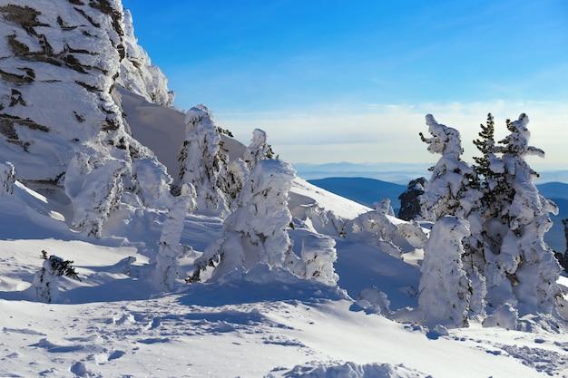 Schneebedeckte bäume von ungewöhnlicher form an der spitze des bergnamens ist zelenaya im dorf sheregesh