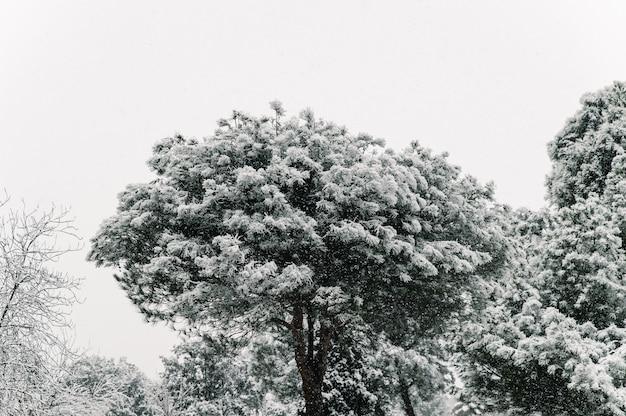 Schneebedeckte baumkronen mit zweigen bedeckt mit schnee auf hintergrund des wohnwohnhauses in der stadt im winter