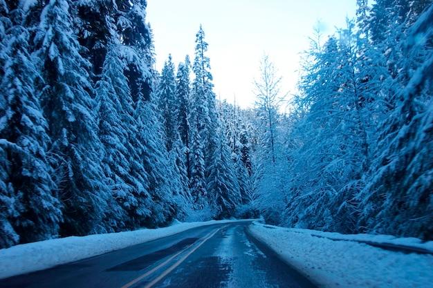 Schneebedeckte bergstraße in mt. rainier nationalpark
