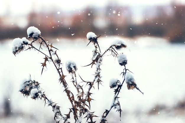 Schneebedeckte distelschüsse bei schneefall