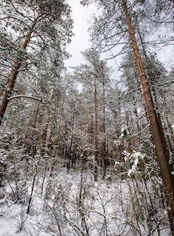 Schneebedeckte gemischte nadel- und laubbäume im winter, weißer schnee liegt überall auf ästen und boden
