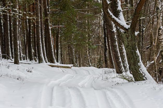 Schneebedeckte straße, die durch den wald im winter, winterlandschaft geht
